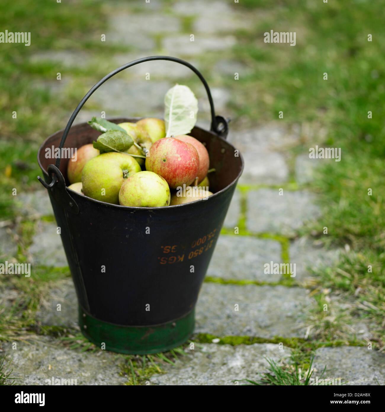 Pail of apples on cobblestone walk - Stock Image