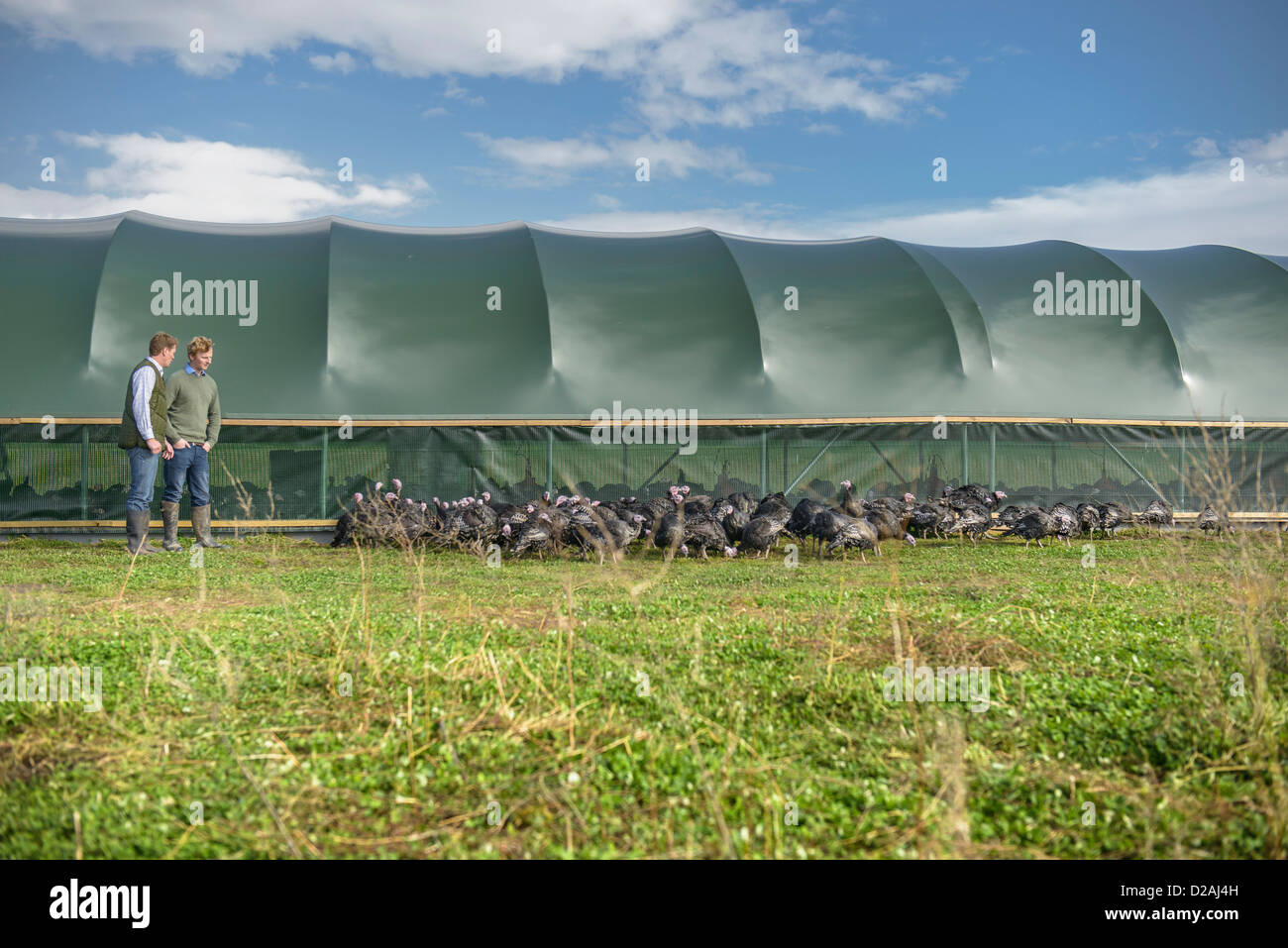 Farmers with turkeys outside barn - Stock Image