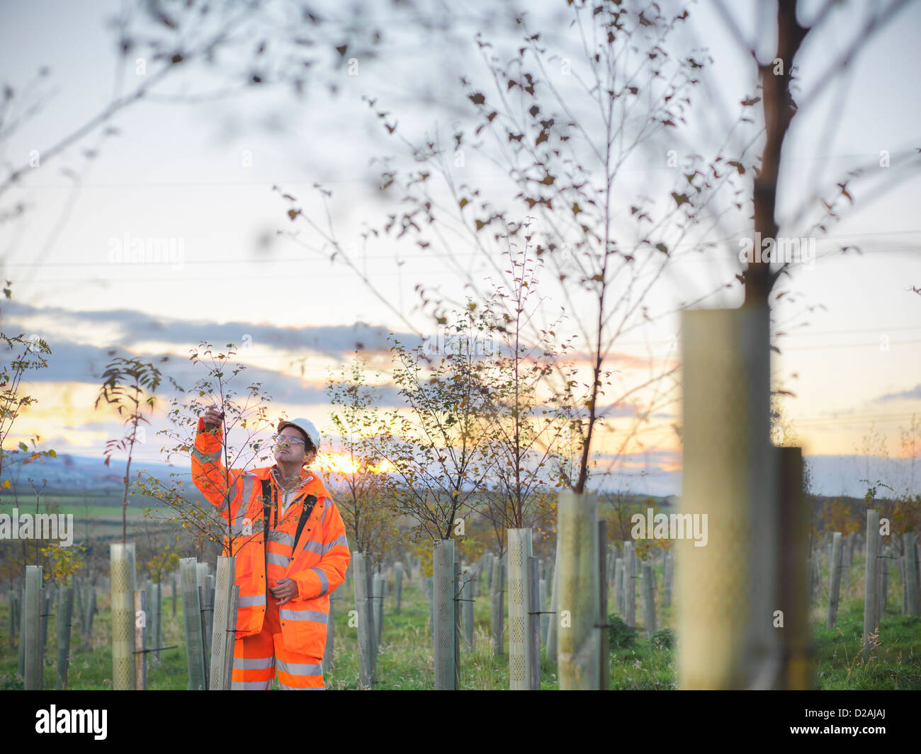 Ecologist examining young trees Stock Photo