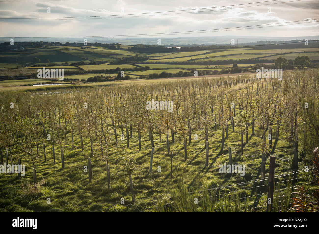 Young trees growing in rural field Stock Photo
