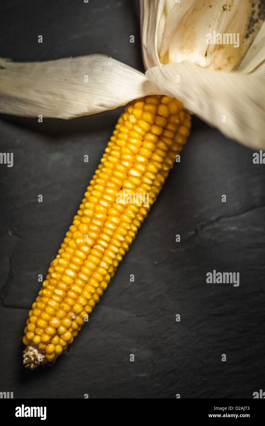 Close up of ear of corn - Stock Image