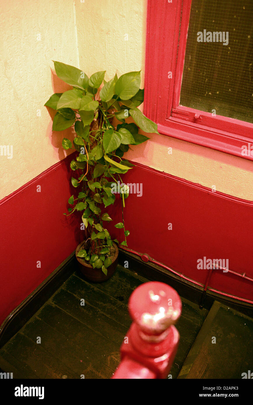 indoor pot plant london pub - Stock Image