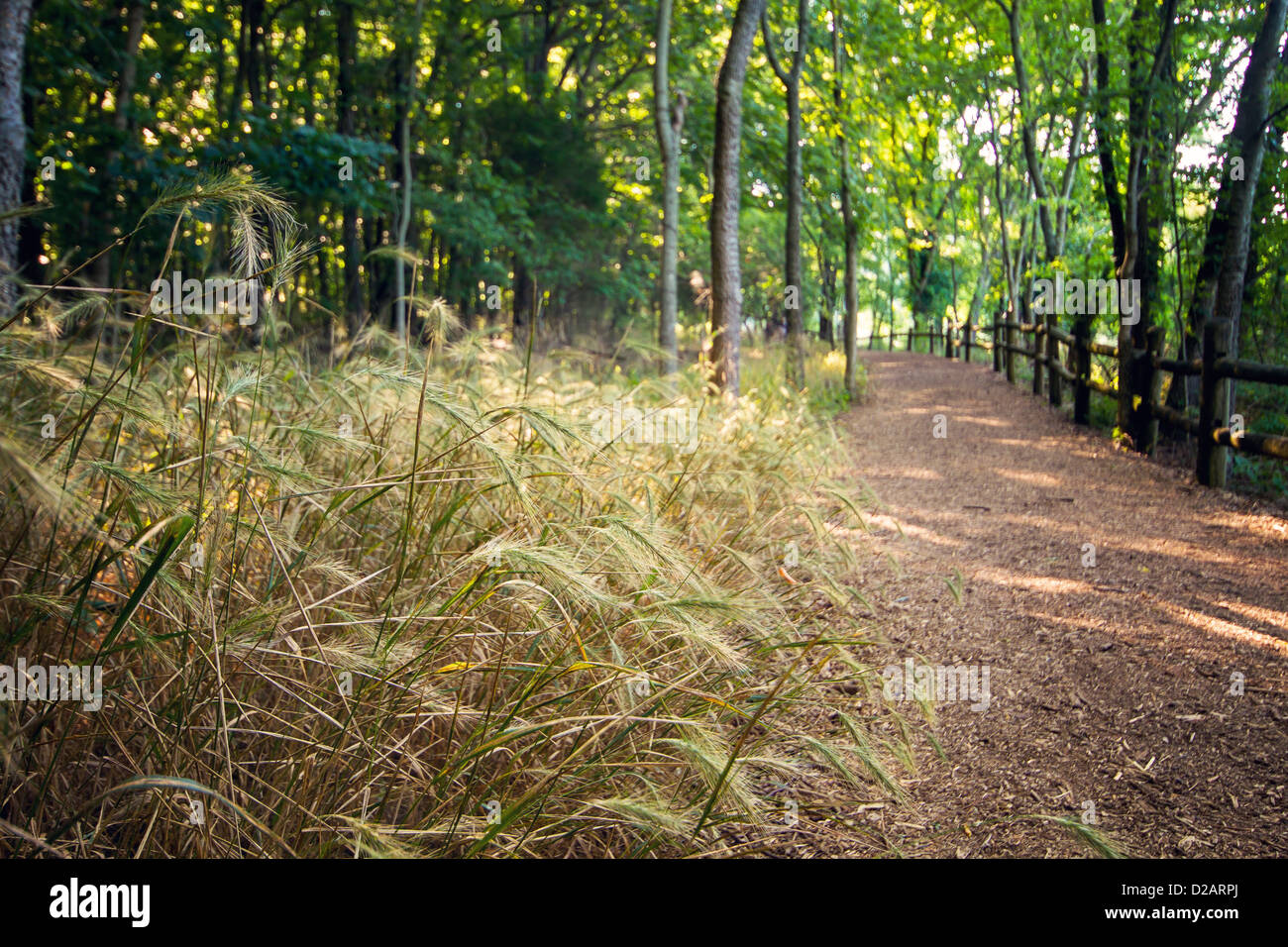 A hiking path heads off into the woods - Stock Image