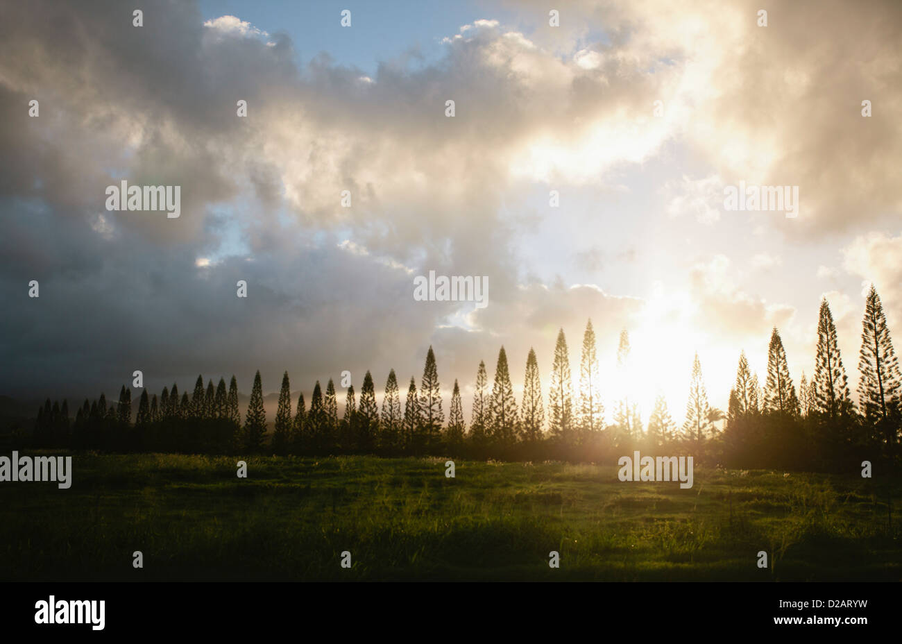 Sun shining through bare trees - Stock Image