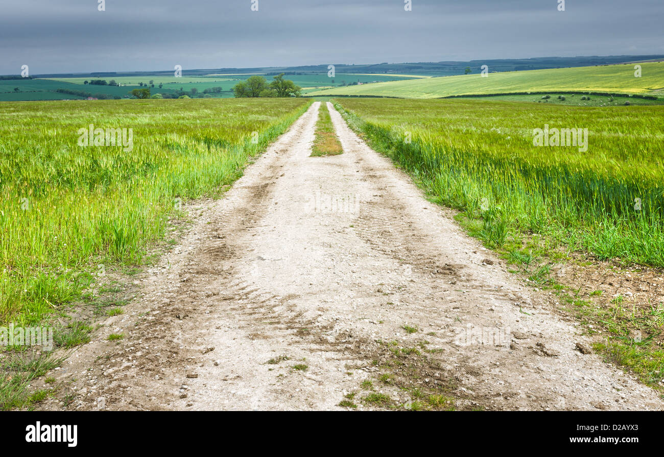 Wheat field and path through the Yorkshire Wolds near the market town of Beverley, Yorkshire, UK. The photo was - Stock Image