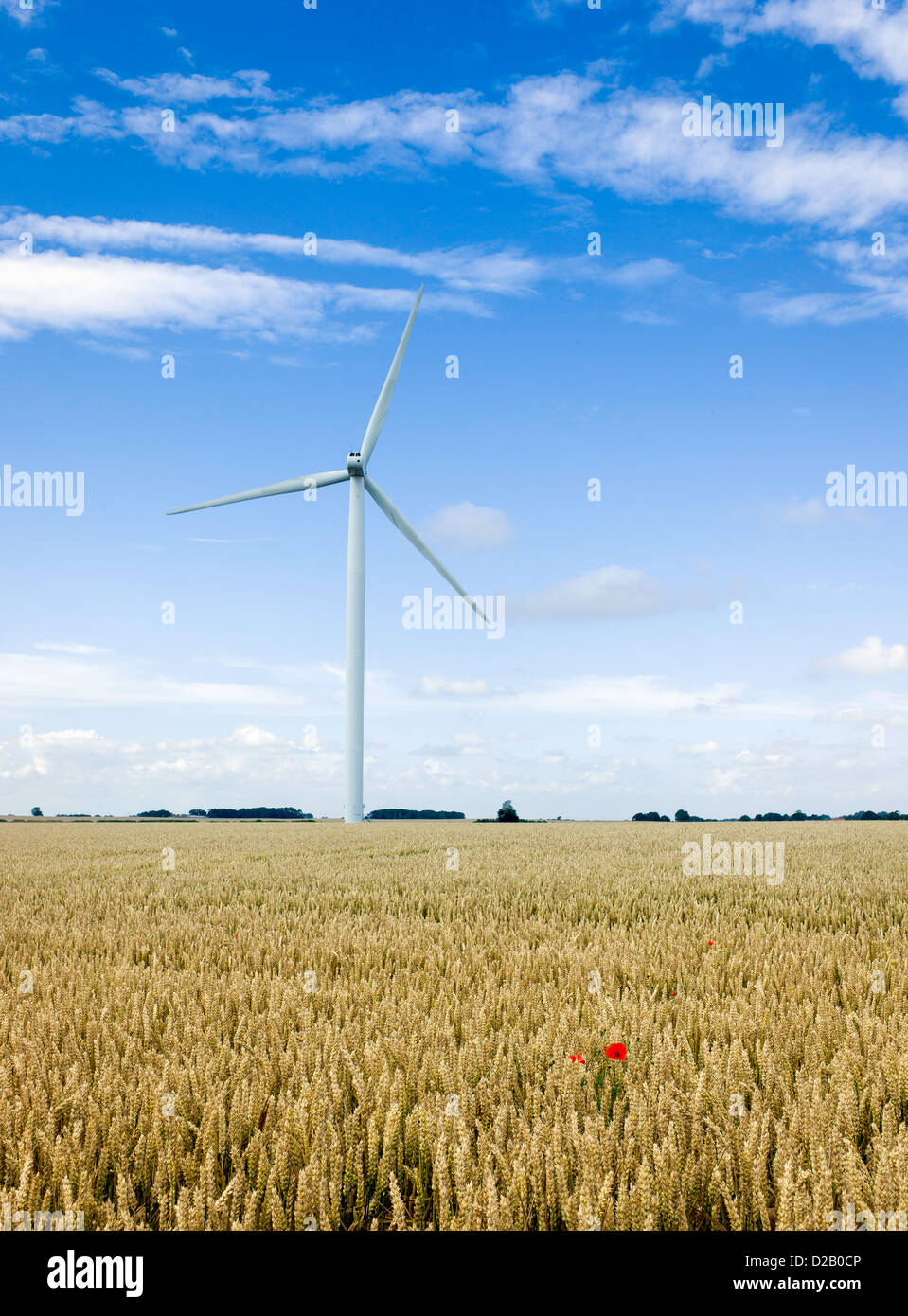 Wind turbine in a field of wheat. The shot was taken mid summer near the town of Beverley which is situated in Yorkshire, - Stock Image