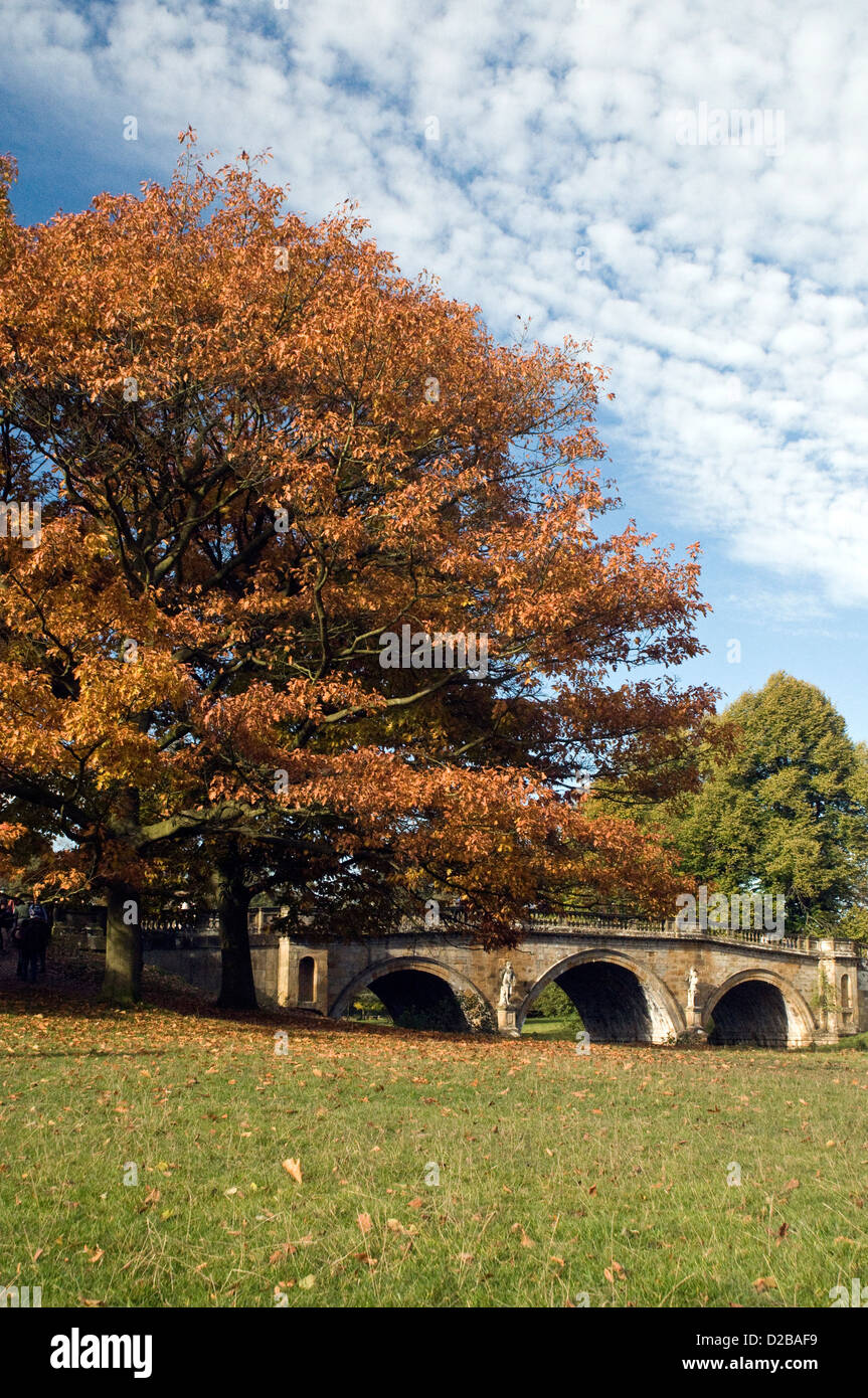 color of Autumn in Derbyshire - Stock Image