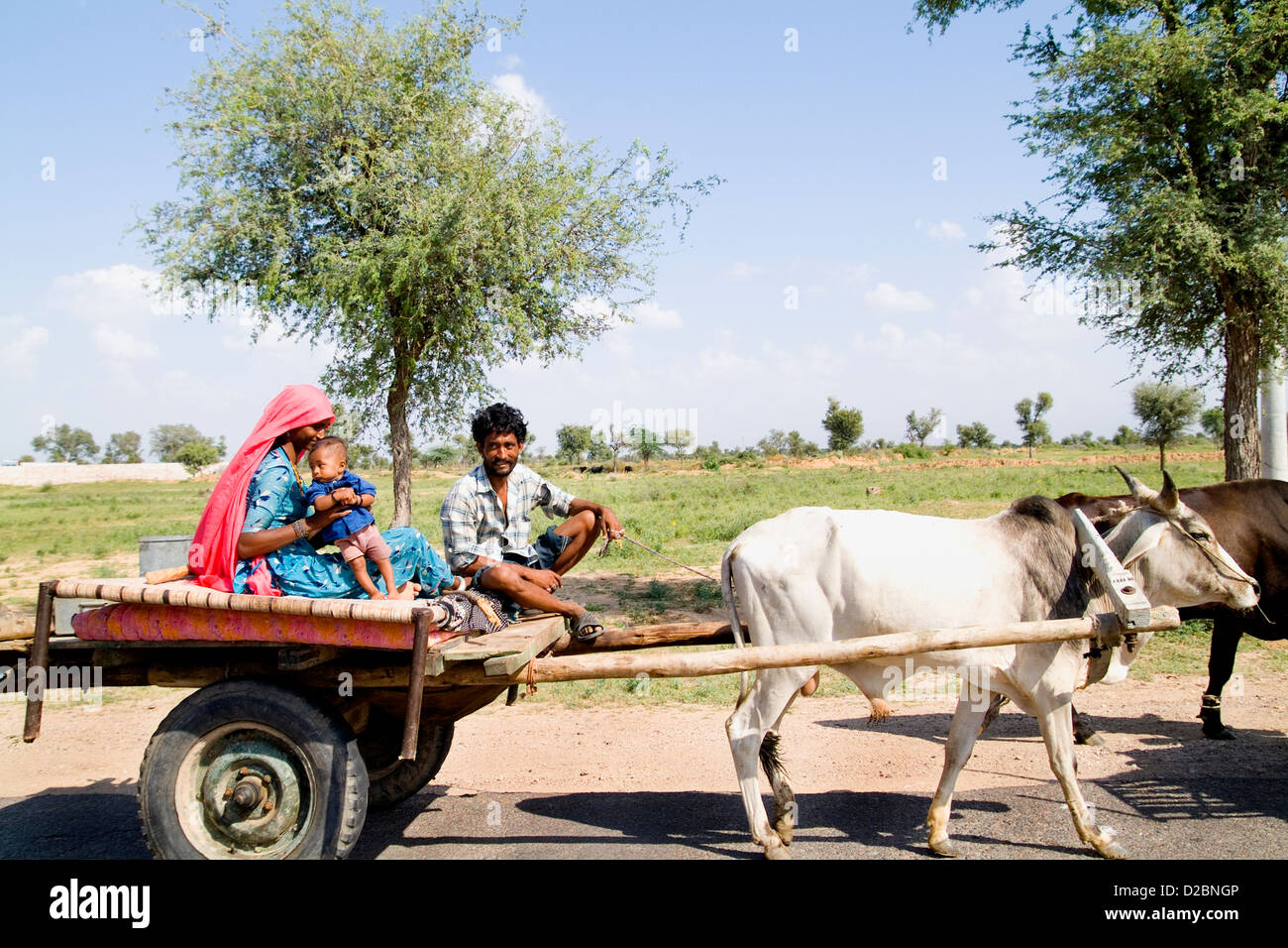 Gypsy Family Going By With Cow Driven Cart To Look For Land At Great Indian Thar Desert In Jodhpur Rajasthan India - Stock Image
