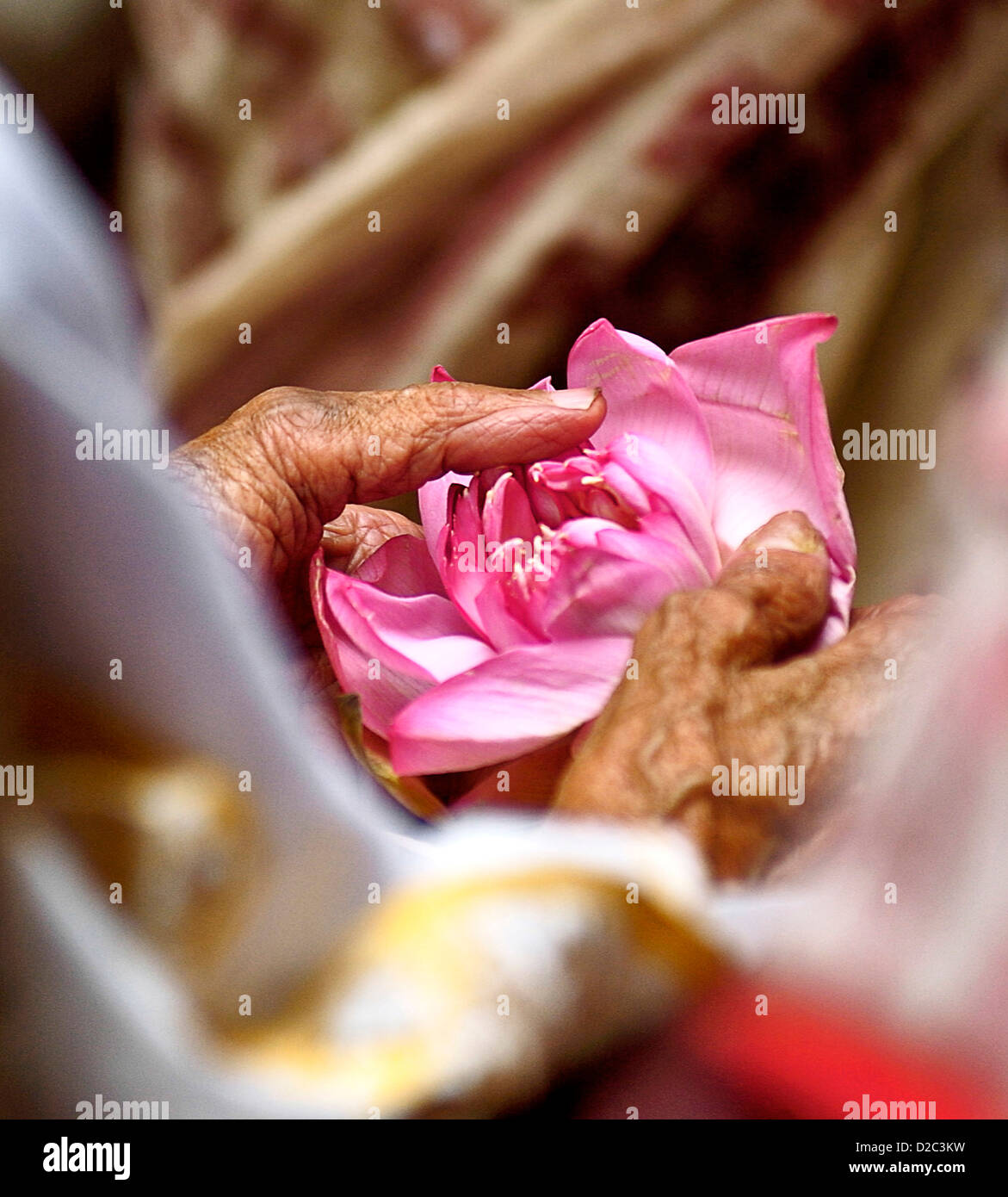 Each holding lotus flower stock photos each holding lotus flower man holding lotus flower in his hand for prayers india stock image mightylinksfo