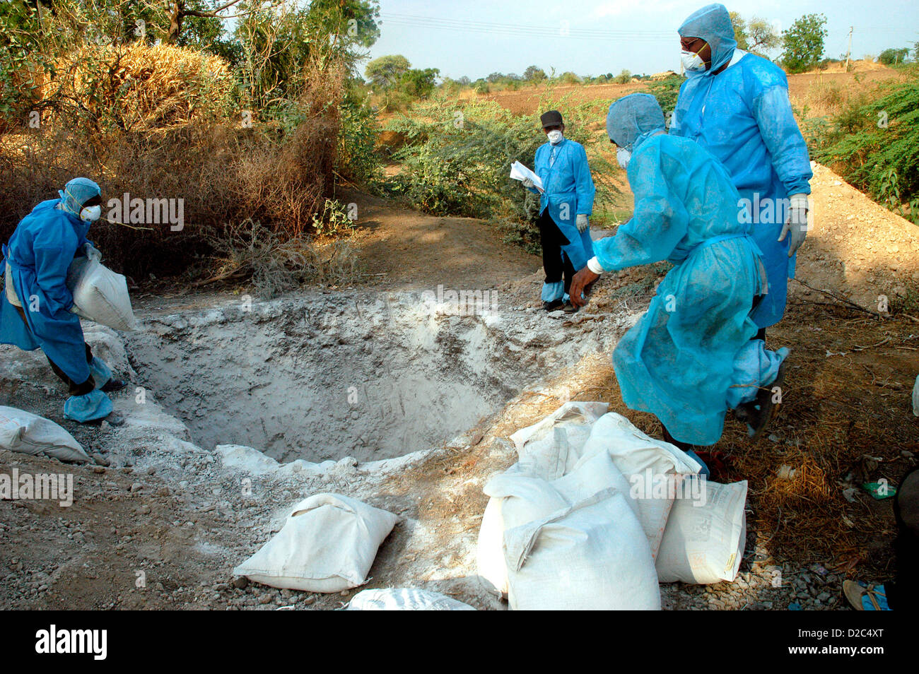 Health Workers Fill Pit Lime Powder Bury Infected Chickens Collected In Backyard Houses As Bird Flu Is Detected - Stock Image