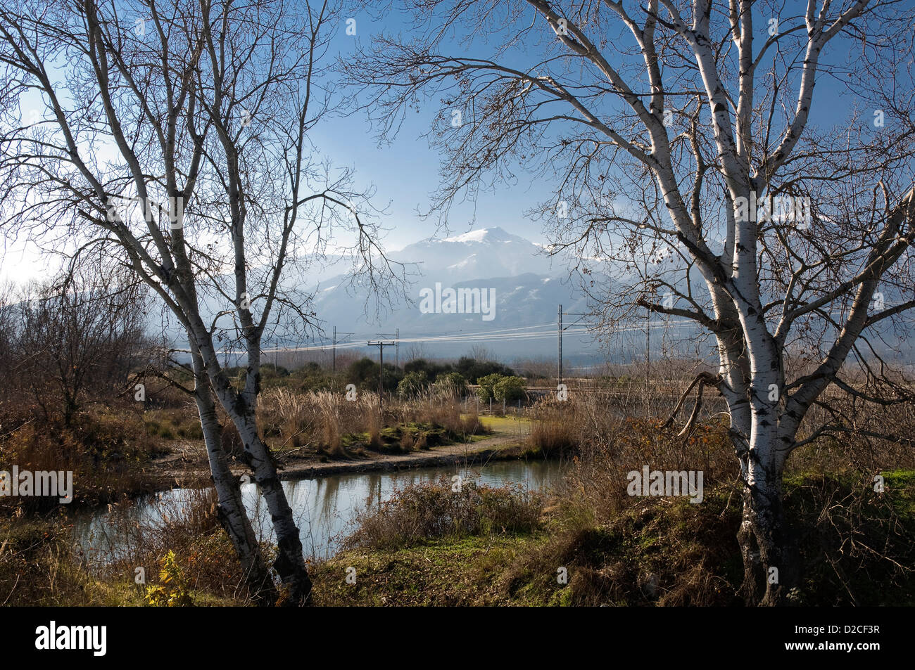 Winter landscape with birch trees at the foot of Mount Olympus (Pieria, Macedonia, Greece, Europe) Stock Photo