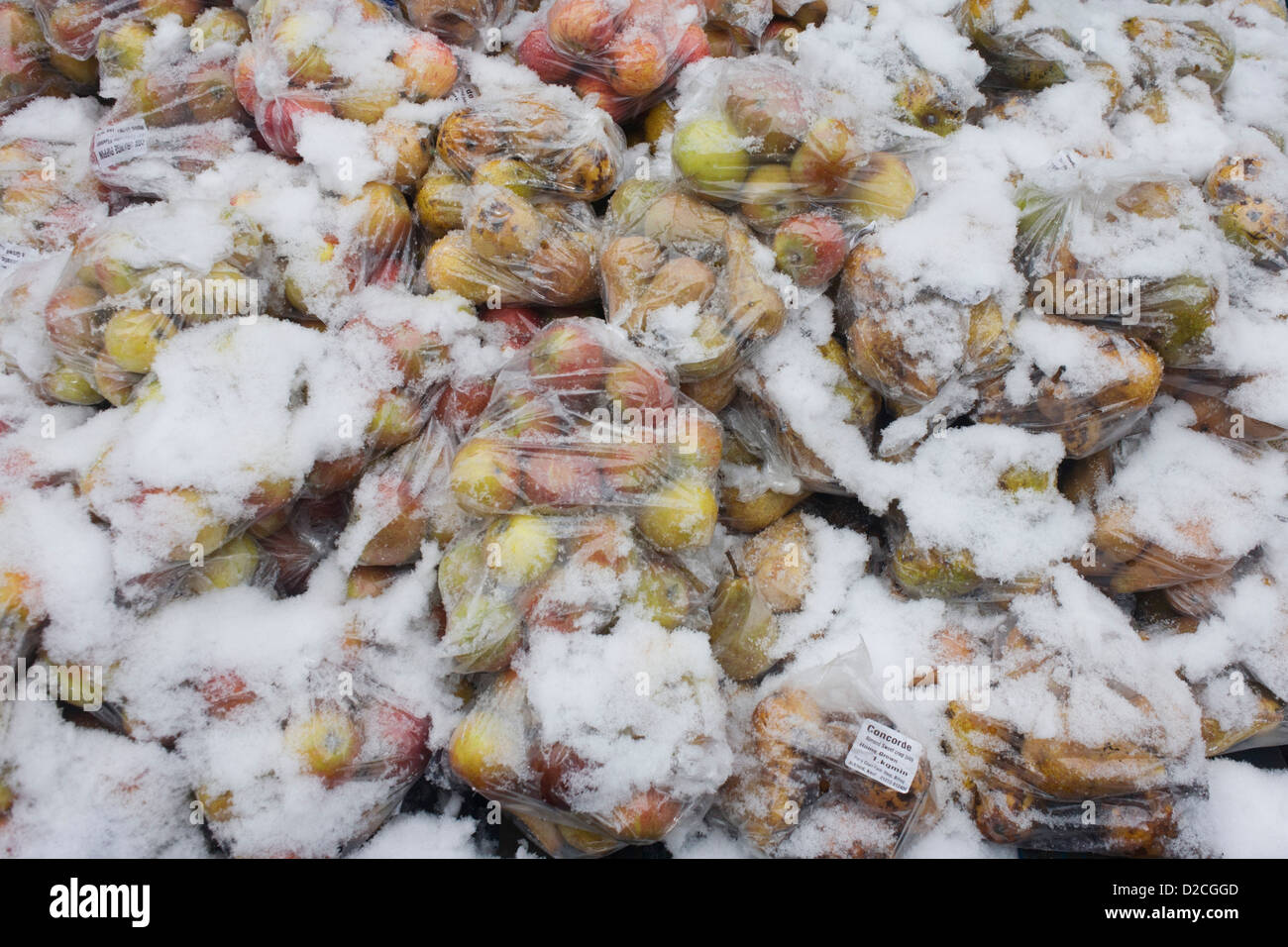 Snow-covered bags of Concorde apples on sale at an outside farmer's market in south London. It is mid-winter - Stock Image