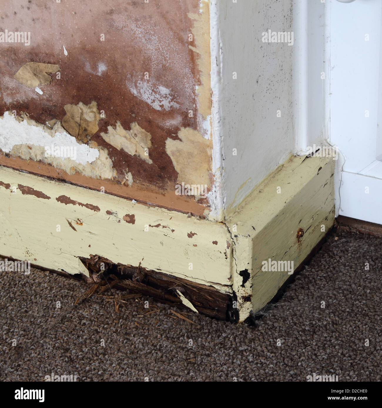 Rising Damp on an Internal Wall of a House with Rotten Skirting Board, UK PROPERTY RELEASED Stock Photo
