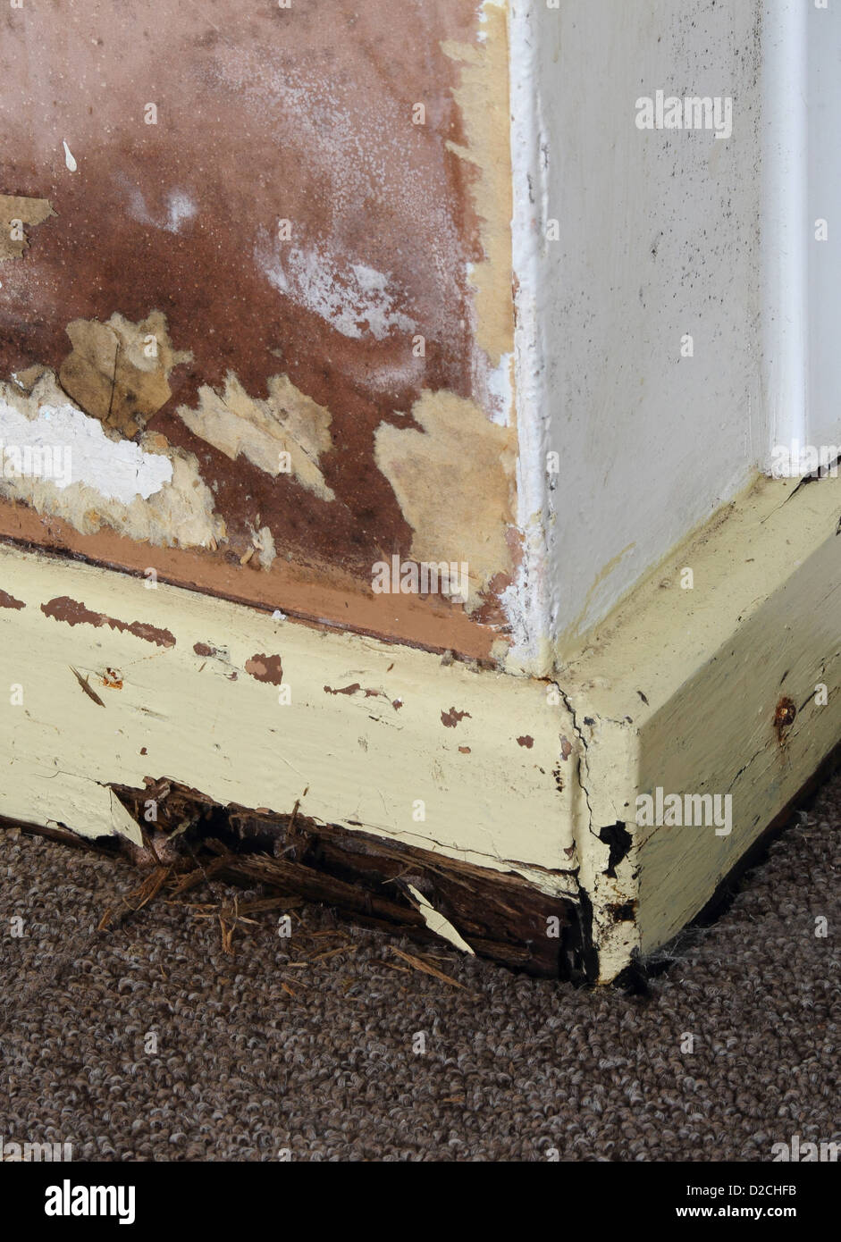 Rising Damp on an Internal Wall of a House with Rotten Skirting Board, UK PROPERTY RELEASED - Stock Image