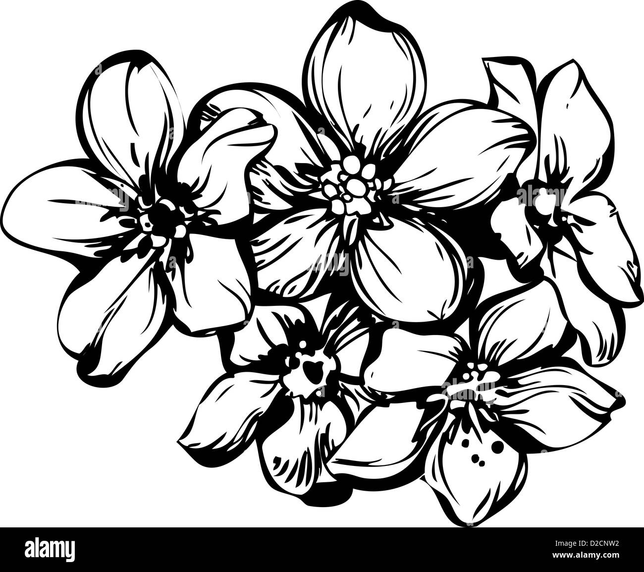 sketch five flowerets in one bouquet Stock Photo