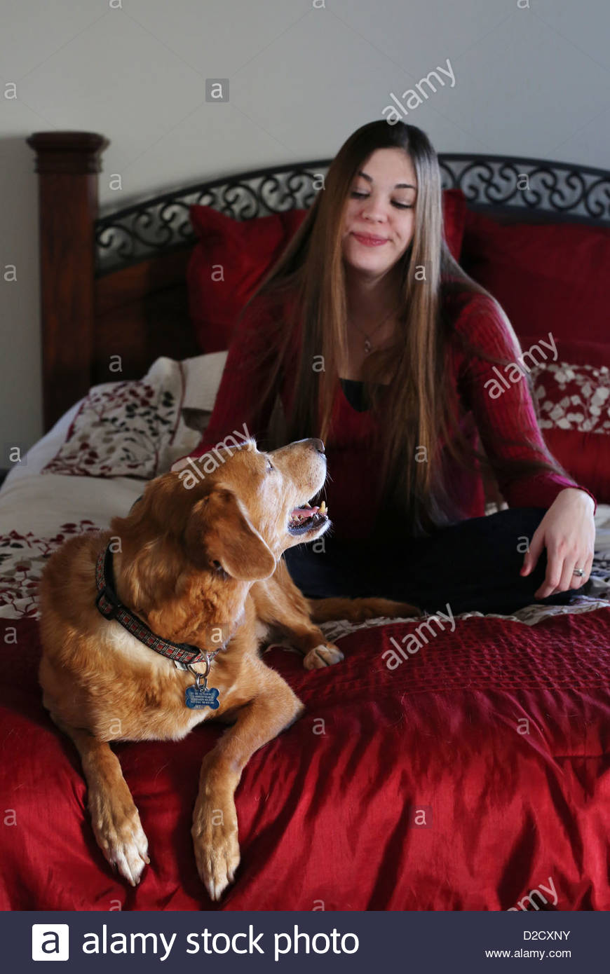 A woman sitting on a bed looking at a dog who is in trouble for being on the bed. - Stock Image