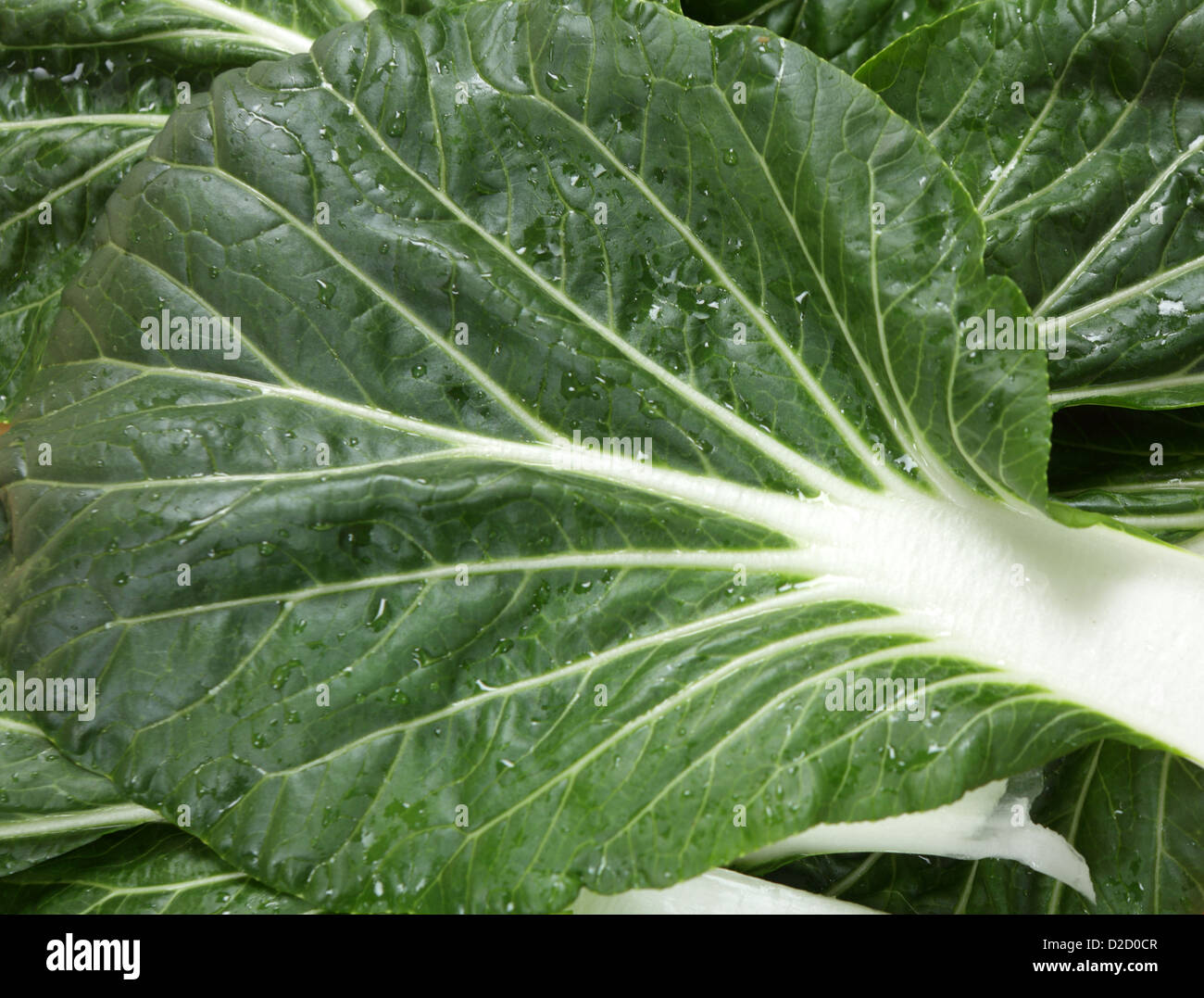leaves of the extremely popular asian vegetable known as bok choy, pak soi or chinese cabbage in the west, - Stock Image