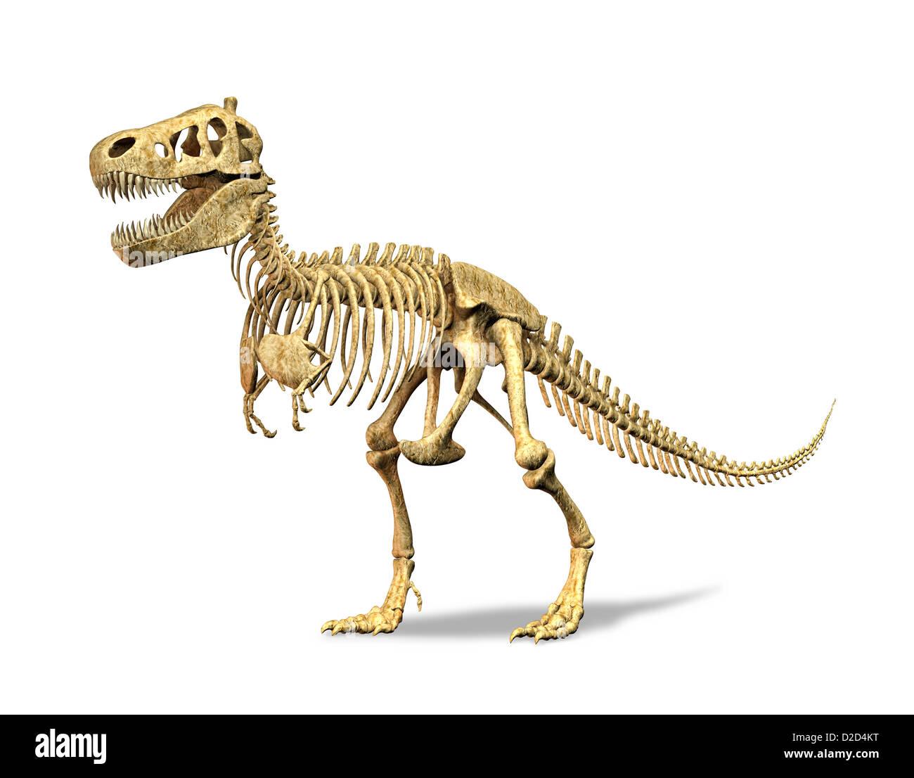 Tyrannosaurus rex skeleton T rex carnivorous dinosaur measuring 5 metres tall and weighing 7 tonnes - Stock Image