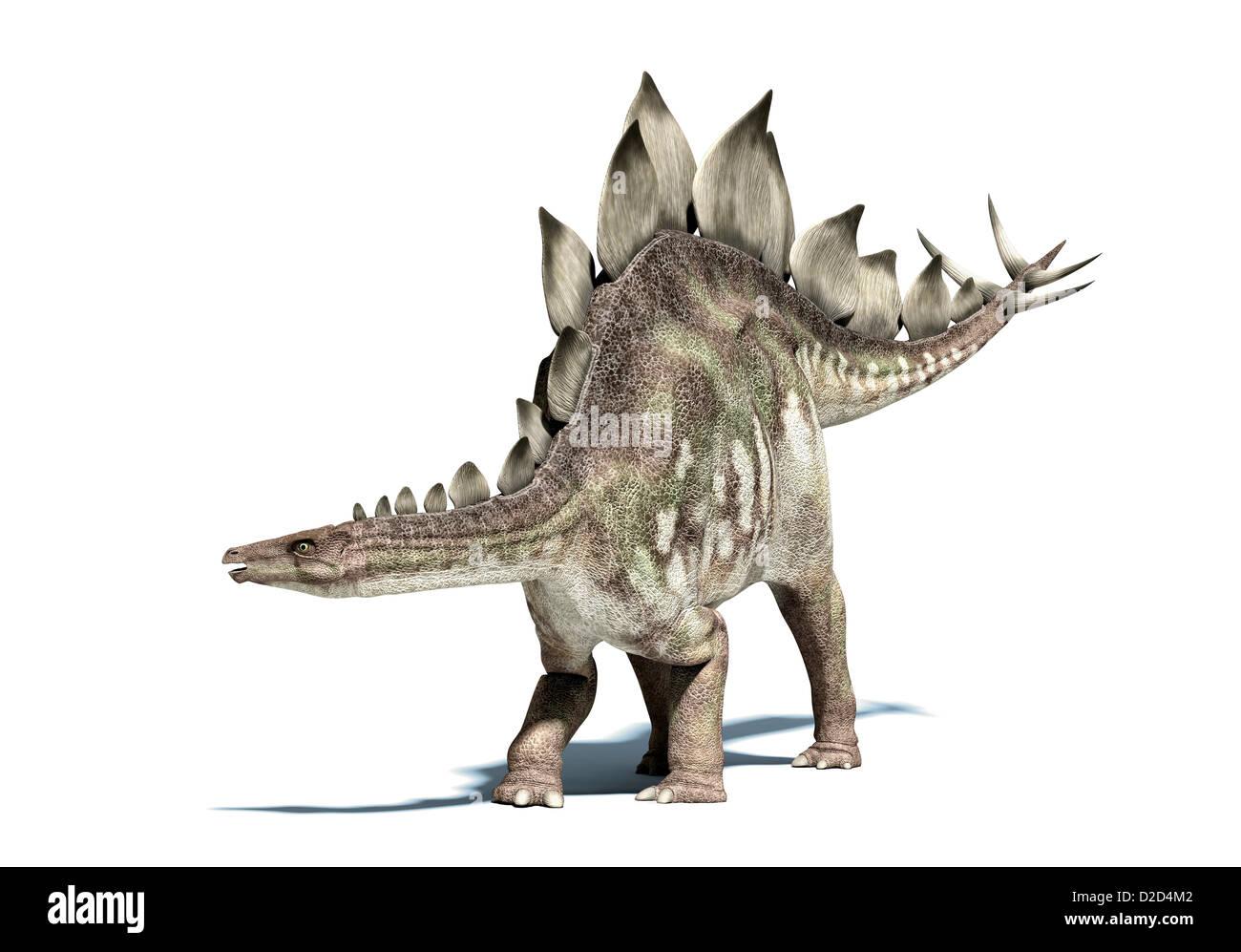 Stegosaurus dinosaur herbivorous dinosaur lived during the Upper Jurassic period - Stock Image