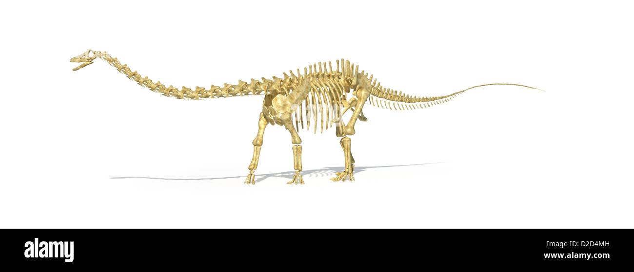 Diplodocus dinosaur skeleton giant herbivorous dinosaur predator late Jurassic - Stock Image