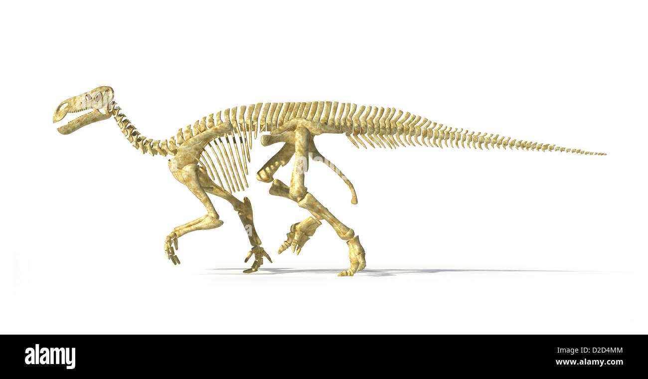 Iguanodon Anatomy Stock Photos & Iguanodon Anatomy Stock Images - Alamy