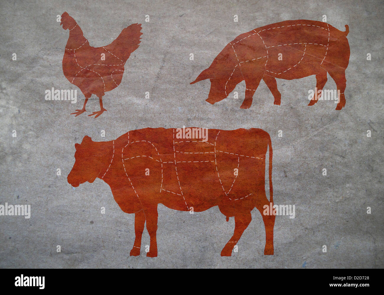 A Butchers Diagram Of Cow Stock Photos Pig Butcher Chicken And Image