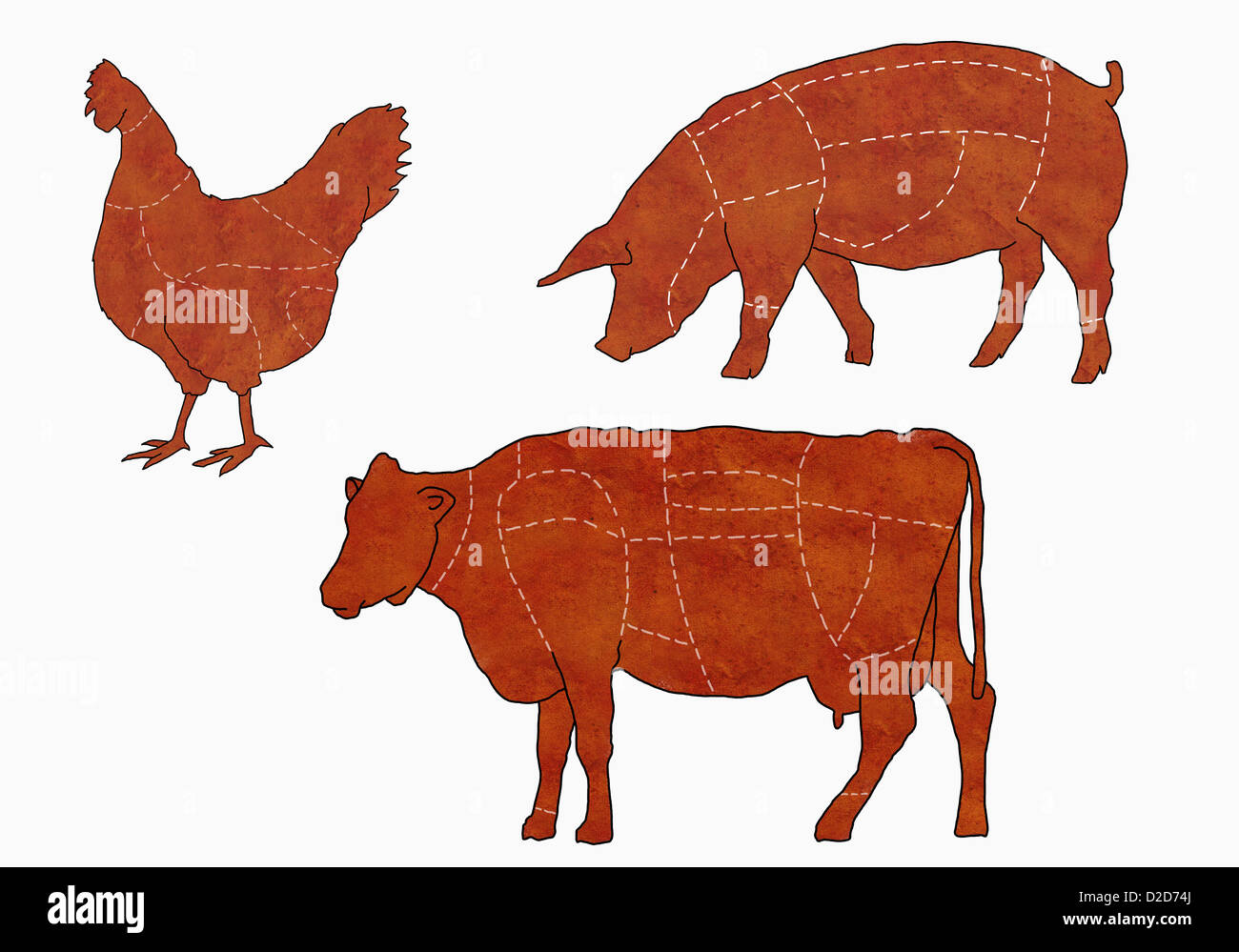 Diagram of cow stock photos diagram of cow stock images alamy a butchers diagram of a cow a chicken and a pig stock image ccuart Gallery
