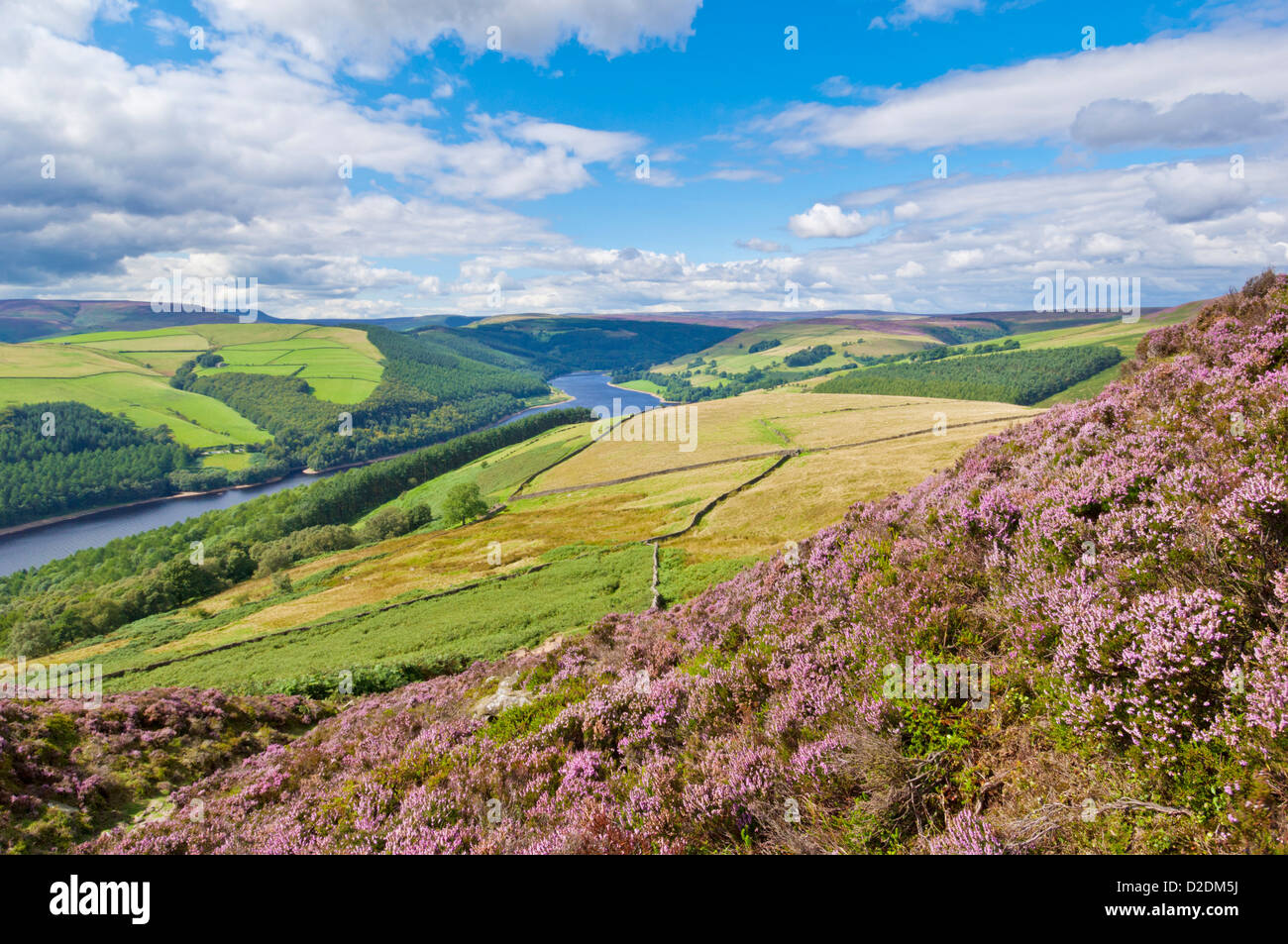 Heather on Derwent edge above Ladybower reservoir Derbyshire Peak District national Park Derbyshire England UK GB - Stock Image