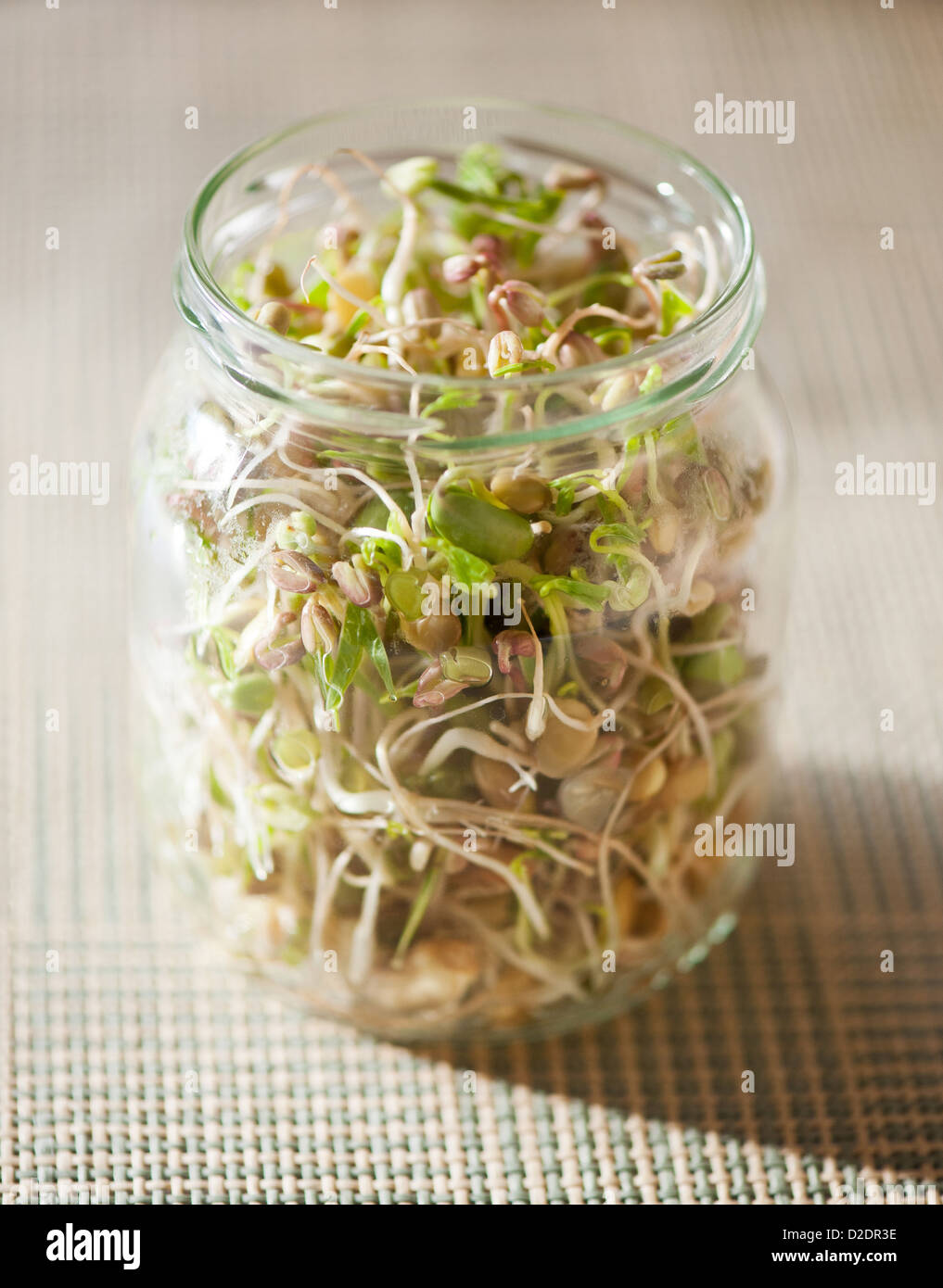 Many cereal sprouts growing in glass jar - Stock Image