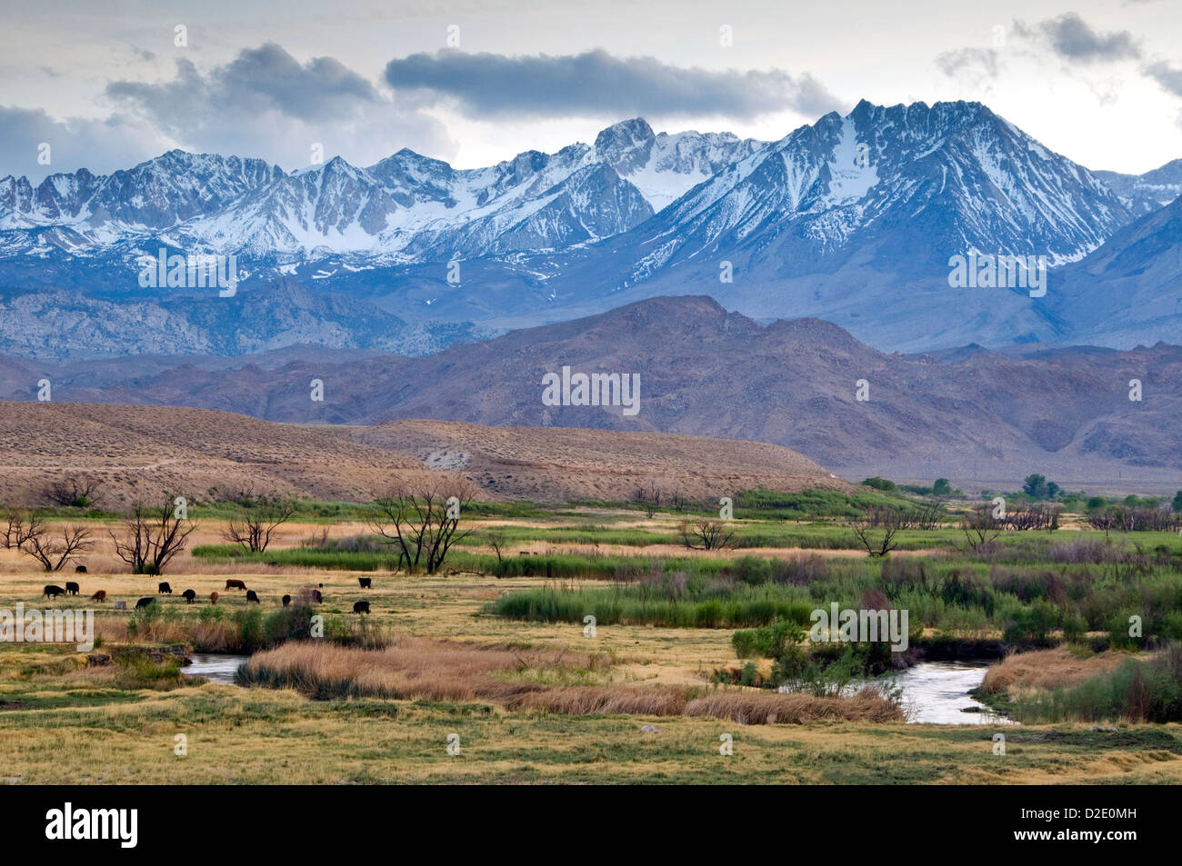 Sierra Nevada Ca: The Eastern Sierra Nevada Mountains Rise Above The Owens