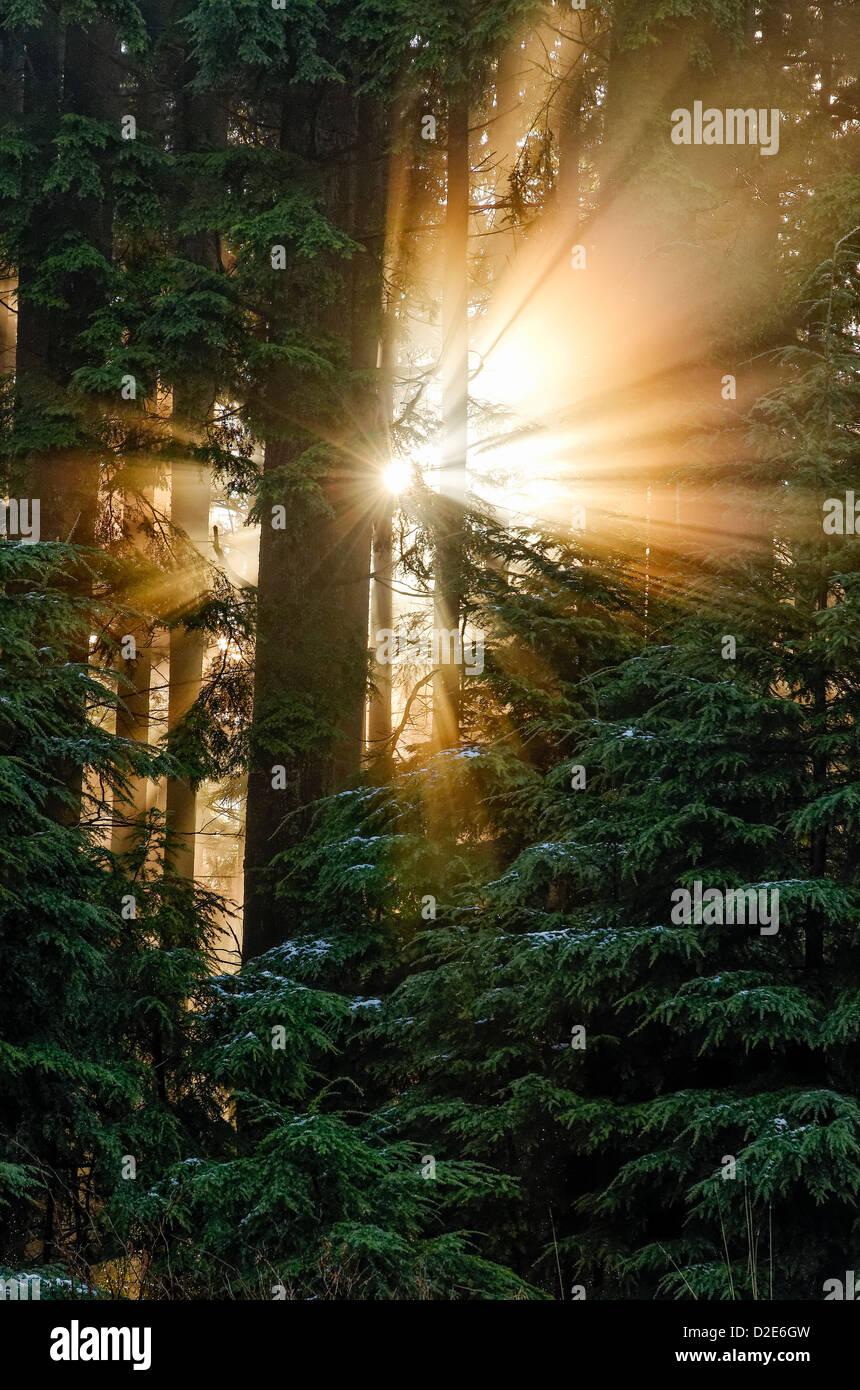 Sunburst crepuscular rays god beams light through trees sunbeams - Stock Image