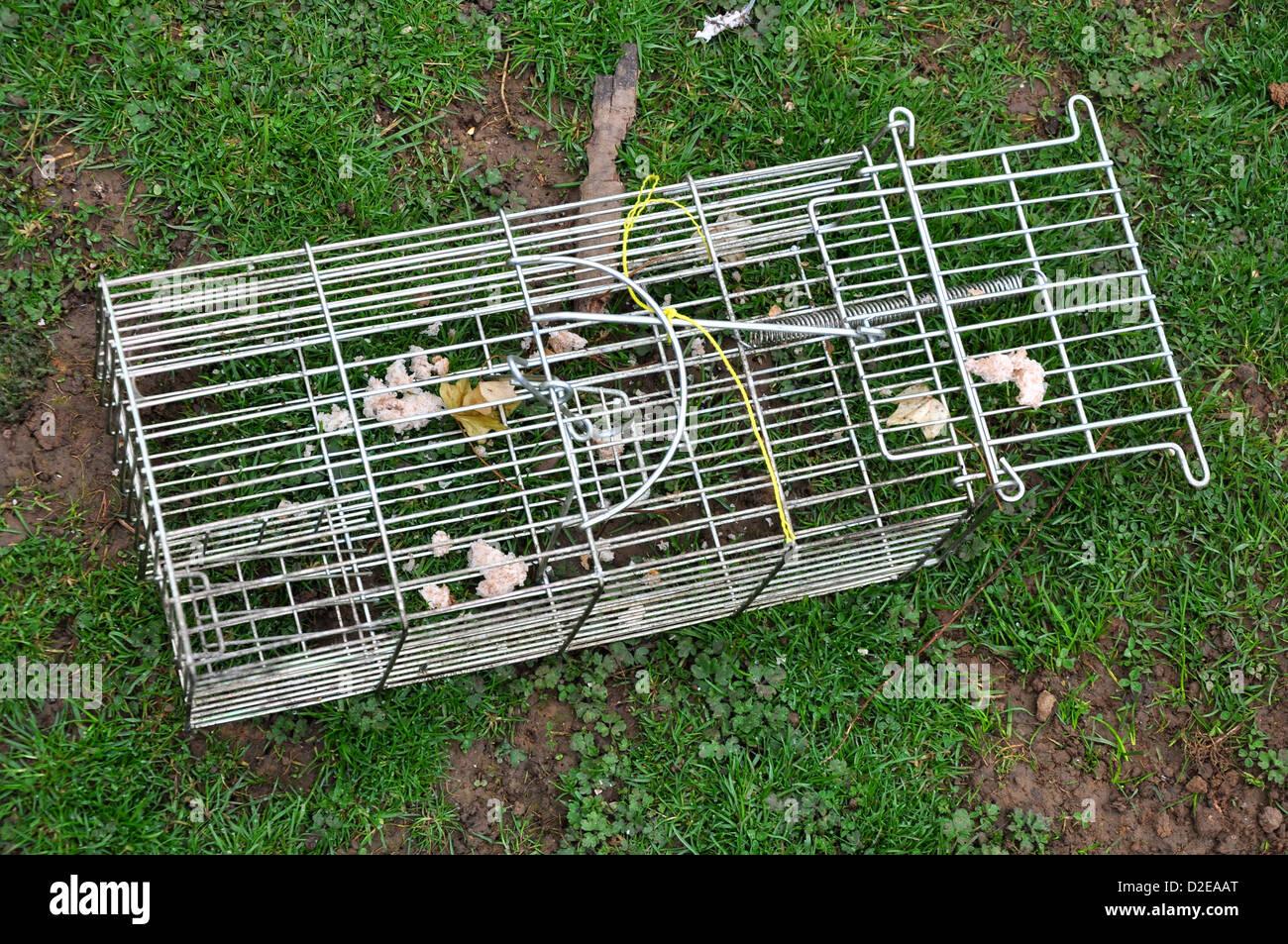 A humane rat trap - Stock Image