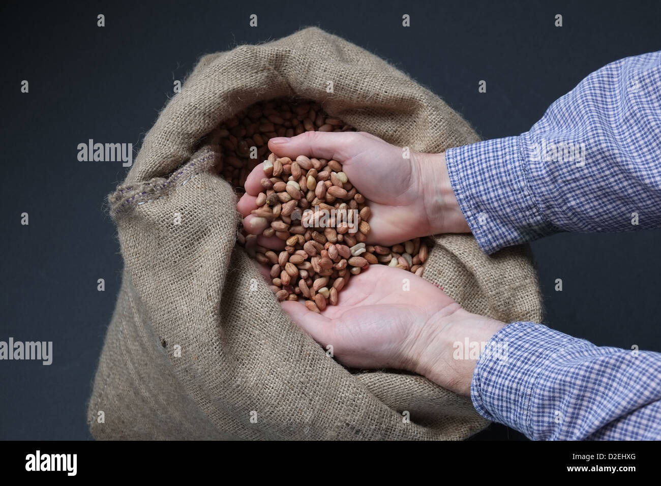 A man's hands hold peanuts in a hessian sack - Stock Image