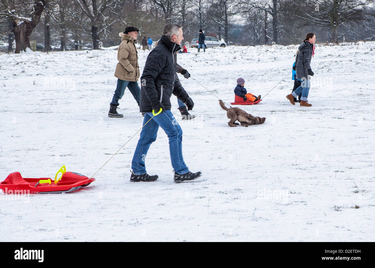 Families, children and pets  enjoying the snow in Richmond Park in Winter,Richmond upon Thames, Greater London, - Stock Image