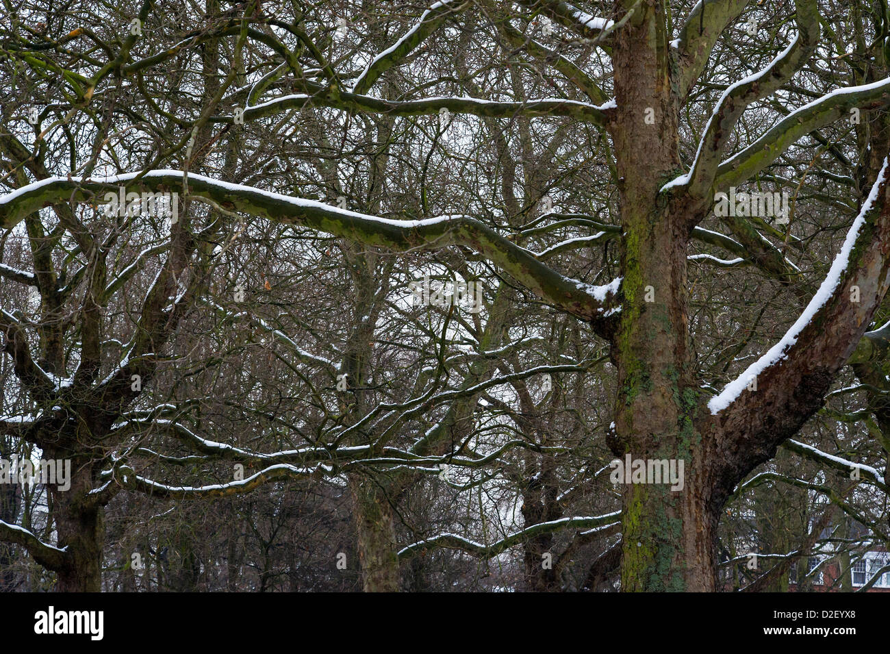 The chilly weather continues to affect South London, 22 January 2013 - Stock Image