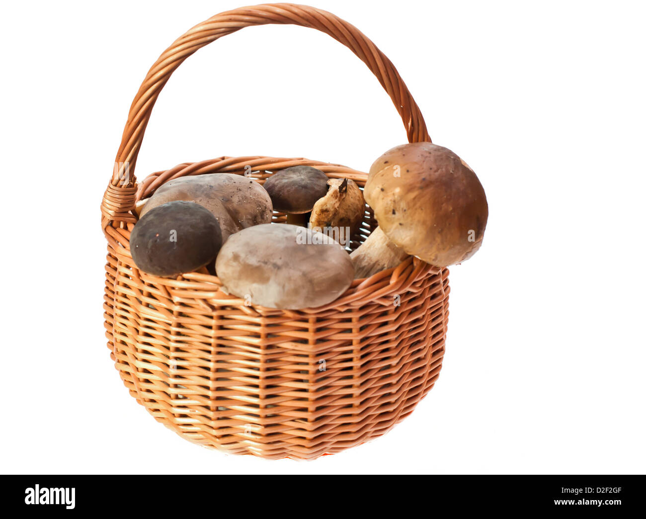 Raw, Isolated Objects, Nature, Delicates, Basket, Food, Fungus, Food And Drink, Brown, Freshness, Cepe, Studio Tasty - Stock Image