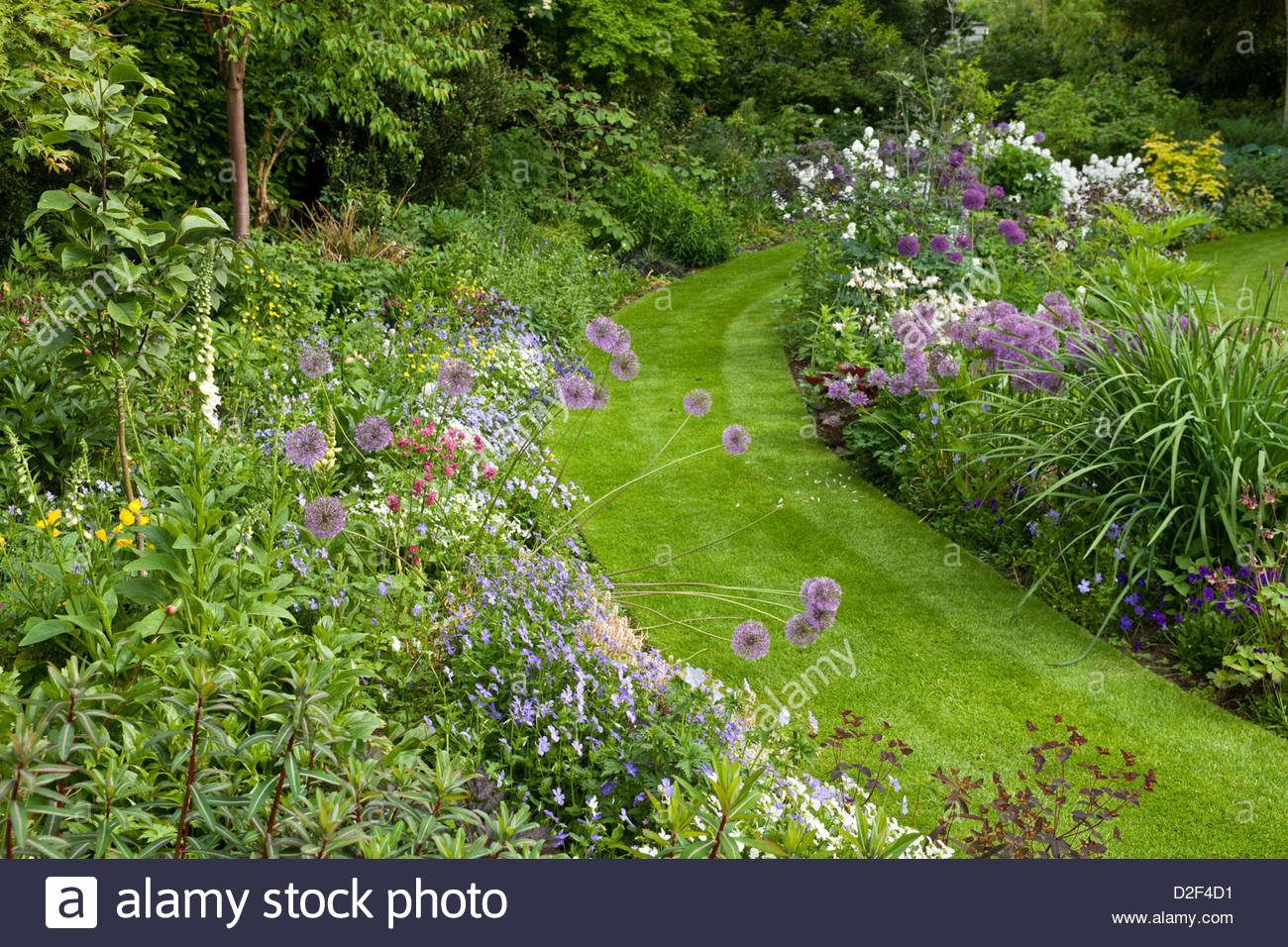 Curving lawn and borders in town garden. Planting includes Allium, Euphorbia, Digitalis, Magnolia, Viola, Aquilegia, - Stock Image