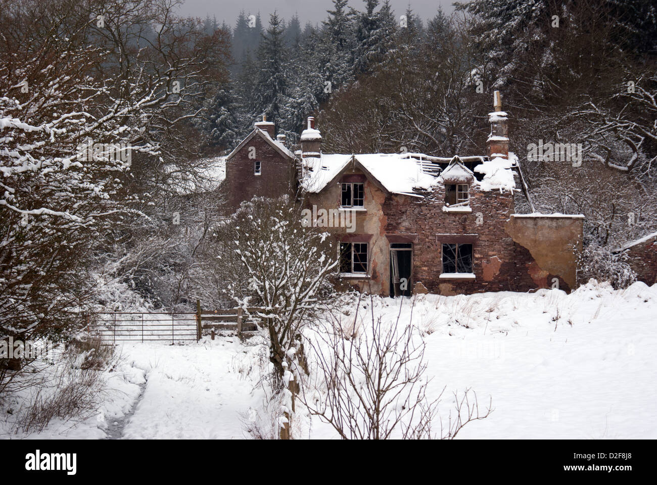 Ruined cottage in the Forest of Dean, Gloucestershire, UK - Stock Image