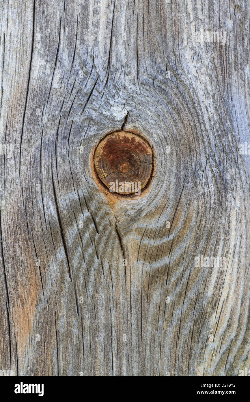Closeup detail of wooden plank with trunk knot from old branch - Stock Image