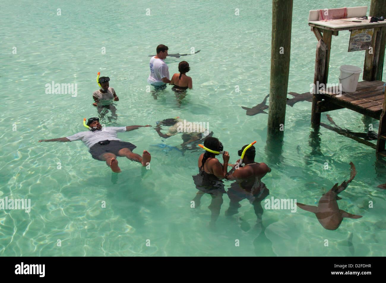 Nurse Sharks Stock Photos & Nurse Sharks Stock Images - Alamy on