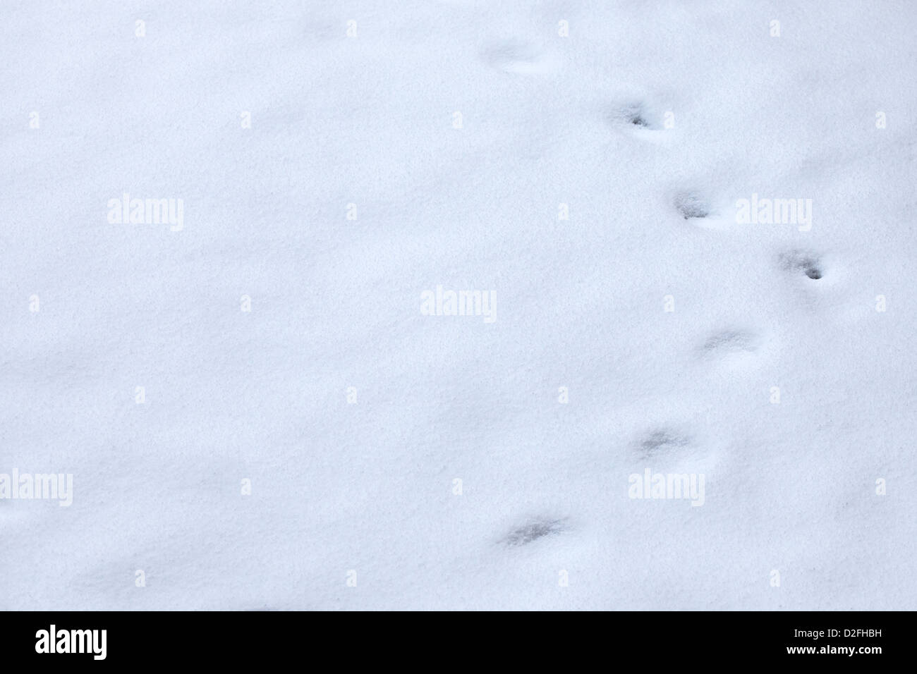 winter Animal tracks in snow - Stock Image