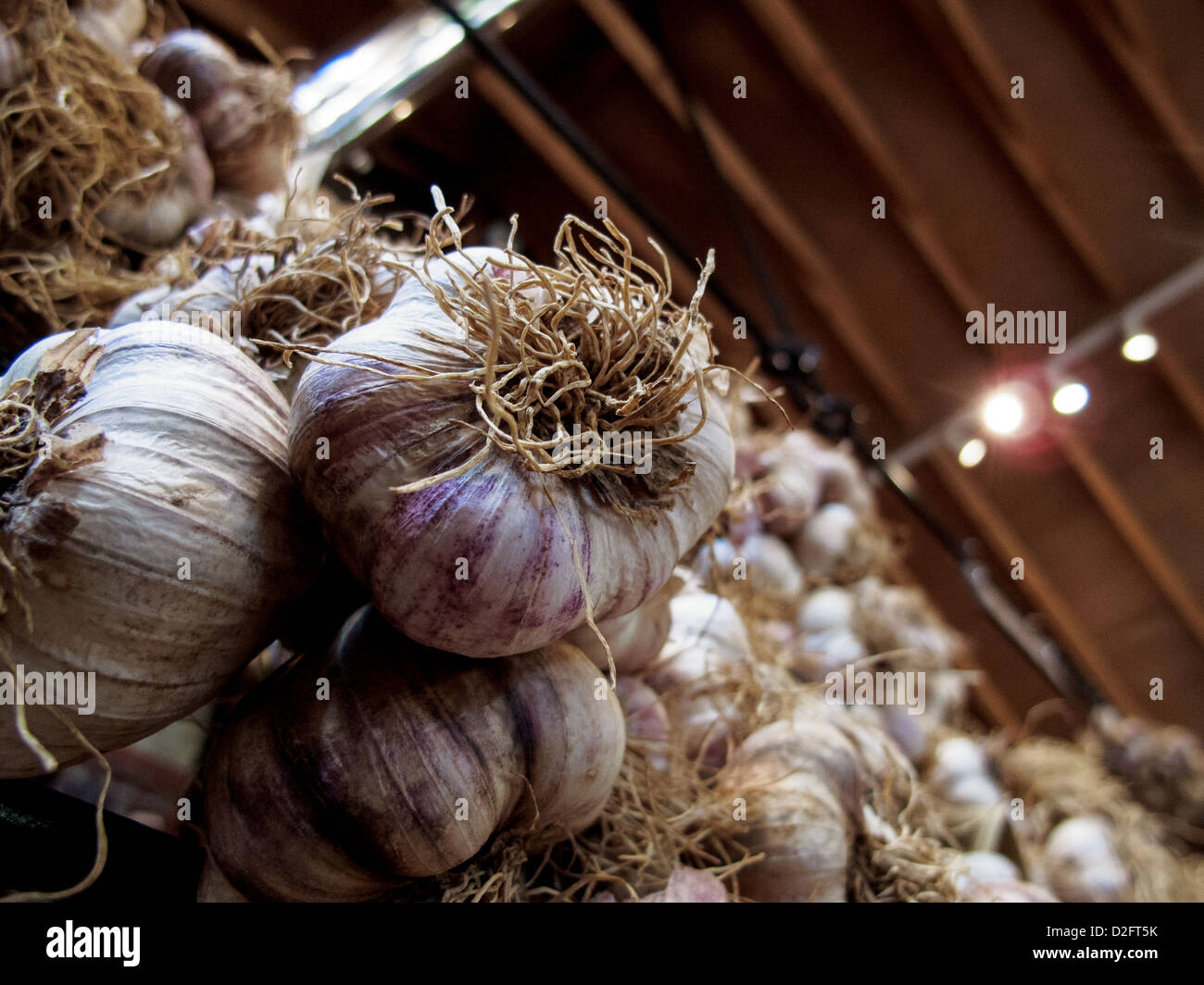 The Garlic farm on the isle of wight. Elephant garlic in the shop - Stock Image