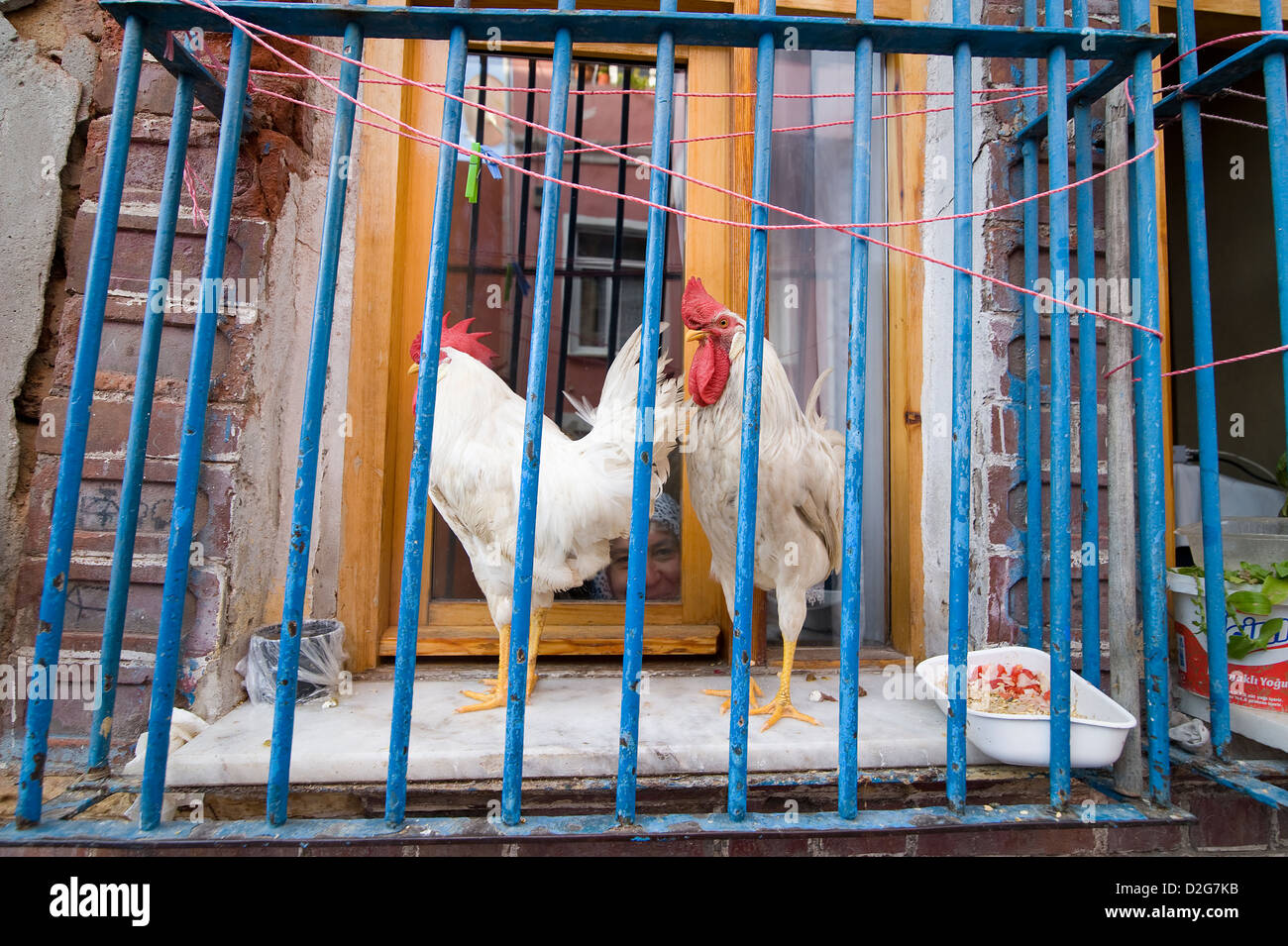 Chicken In Window Stock Photos & Chicken In Window Stock Images - Alamy