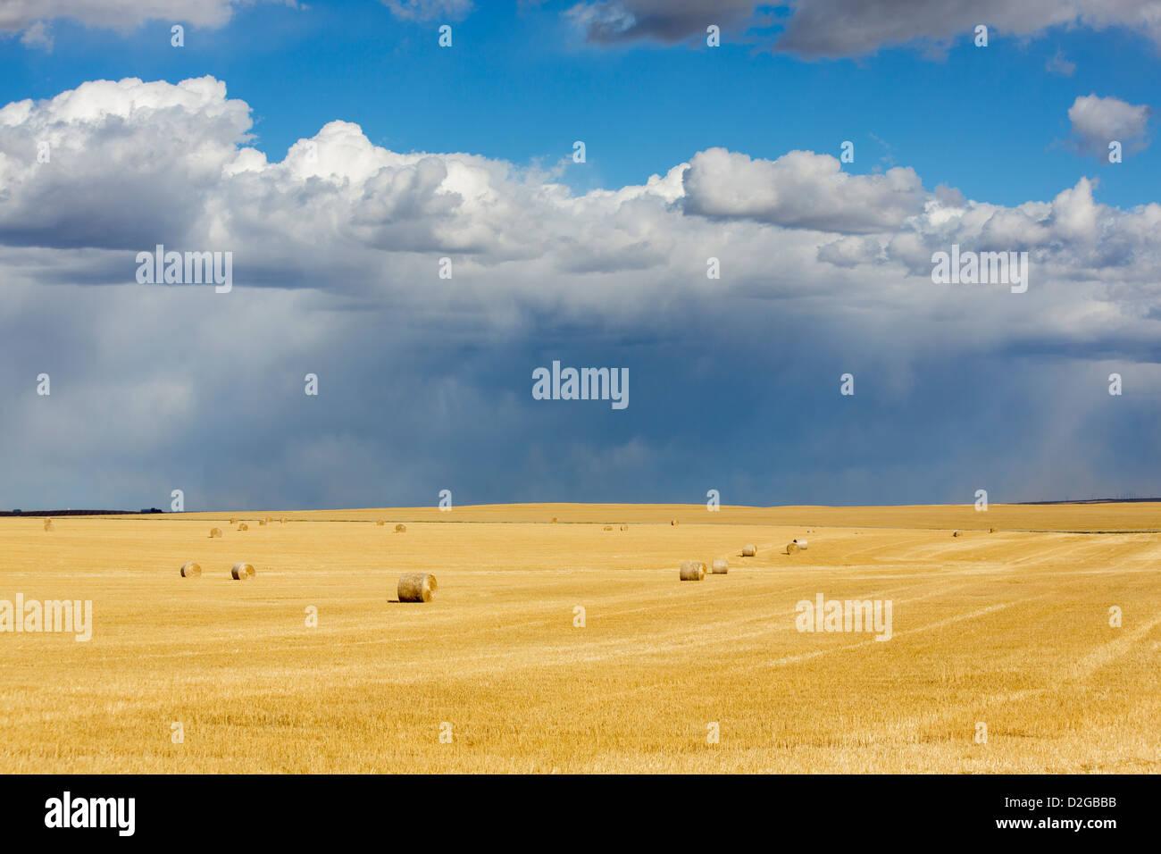 Storm across harvested farm fields in Alberta Canada - Stock Image