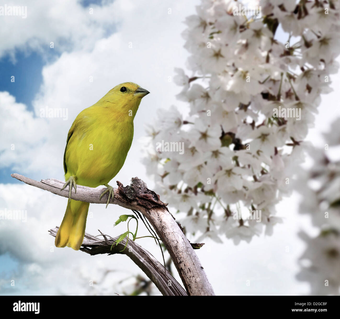 Yellow Bird Perching On A Branch - Stock Image