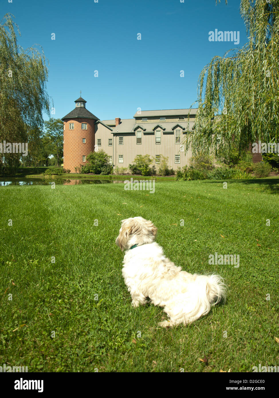 shih-tsu dog sitting on lawn looking at house with turret - Stock Image