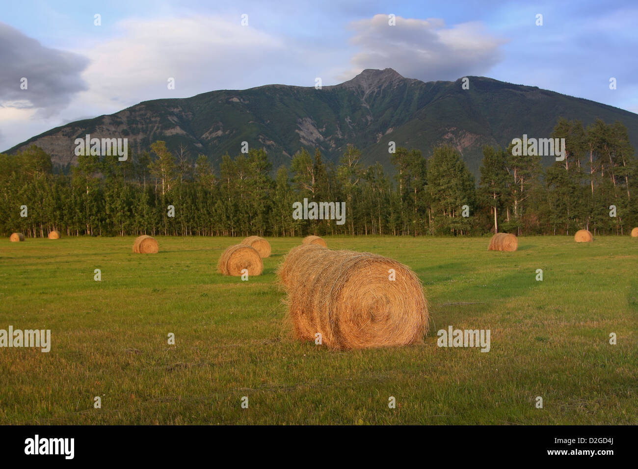 Evening light cast on hay bails - Stock Image