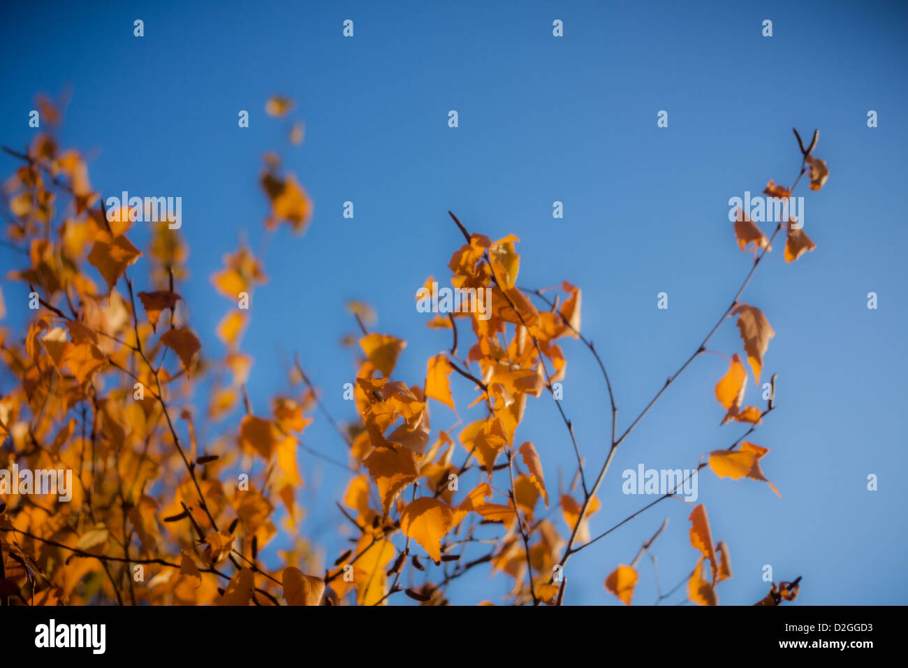 Autumn Tree, Westerville, Ohio. - Stock Image