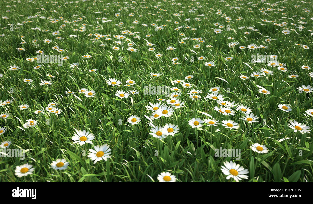 Plenty of daisy flowers bird eye stock photos plenty of daisy grass meadow bird eye view plenty of daisy flowers quite close up view izmirmasajfo