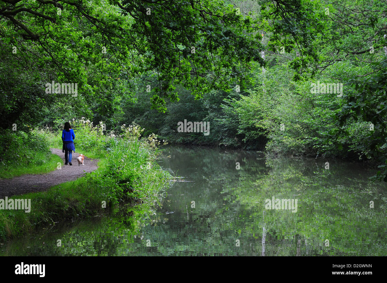 A view of the Basingstoke Canal - Stock Image